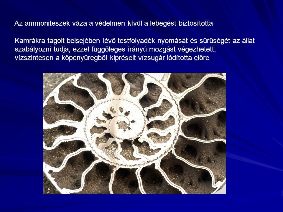 Az ammoniteszek váza a védelmen kívül a lebegést biztosította Kamrákra tagolt belsejében lévő testfolyadék nyomását és sűrűségét az állat szabályozni tudja, ezzel függőleges irányú mozgást végezhetett, vízszintesen a köpenyüregből kipréselt vízsugár lódította előre