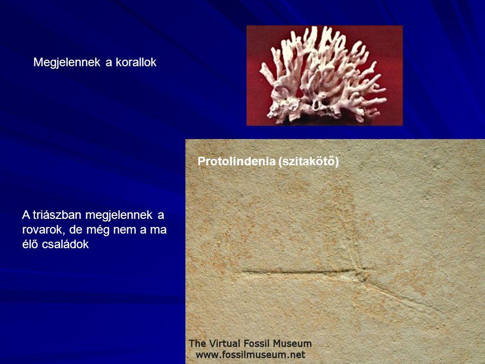 Megjelennek a korallok A triászban megjelennek a rovarok, de még nem a ma élő családok Protolindenia (szitakötő)