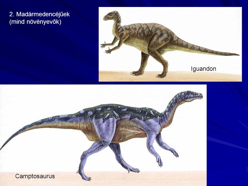 2. Madármedencéjűek (mind növényevők) Camptosaurus Iguandon