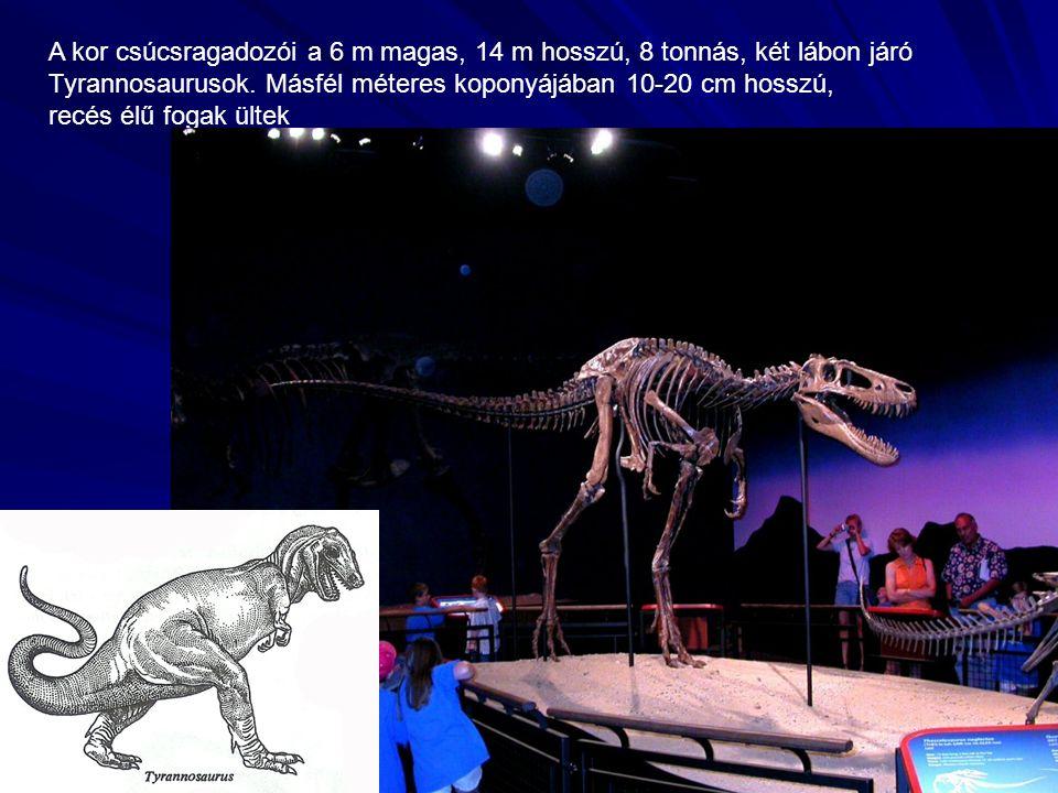 A kor csúcsragadozói a 6 m magas, 14 m hosszú, 8 tonnás, két lábon járó Tyrannosaurusok.