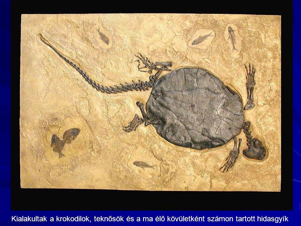 Kialakultak a krokodilok, teknősök és a ma élő kövületként számon tartott hidasgyík