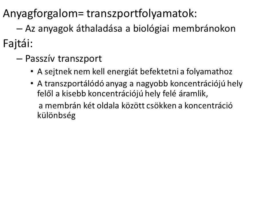 Anyagforgalom= transzportfolyamatok: – Az anyagok áthaladása a biológiai membránokon Fajtái: – Passzív transzport A sejtnek nem kell energiát befektetni a folyamathoz A transzportálódó anyag a nagyobb koncentrációjú hely felől a kisebb koncentrációjú hely felé áramlik, a membrán két oldala között csökken a koncentráció különbség