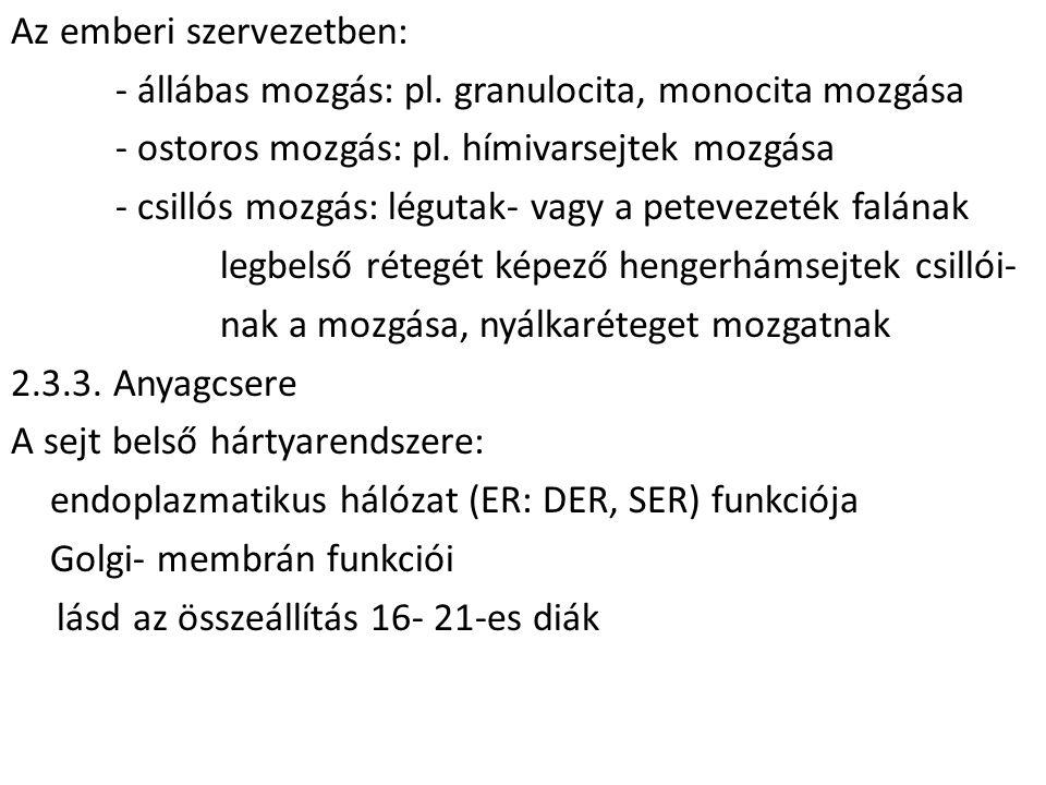 Az emberi szervezetben: - állábas mozgás: pl. granulocita, monocita mozgása - ostoros mozgás: pl.