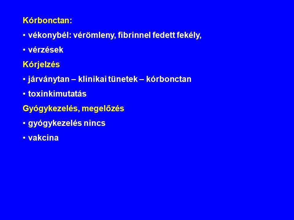 Kórbonctan: vékonybél: vérömleny, fibrinnel fedett fekély, vérzések Kórjelzés járványtan – klinikai tünetek – kórbonctan toxinkimutatás Gyógykezelés, megelőzés gyógykezelés nincs vakcina