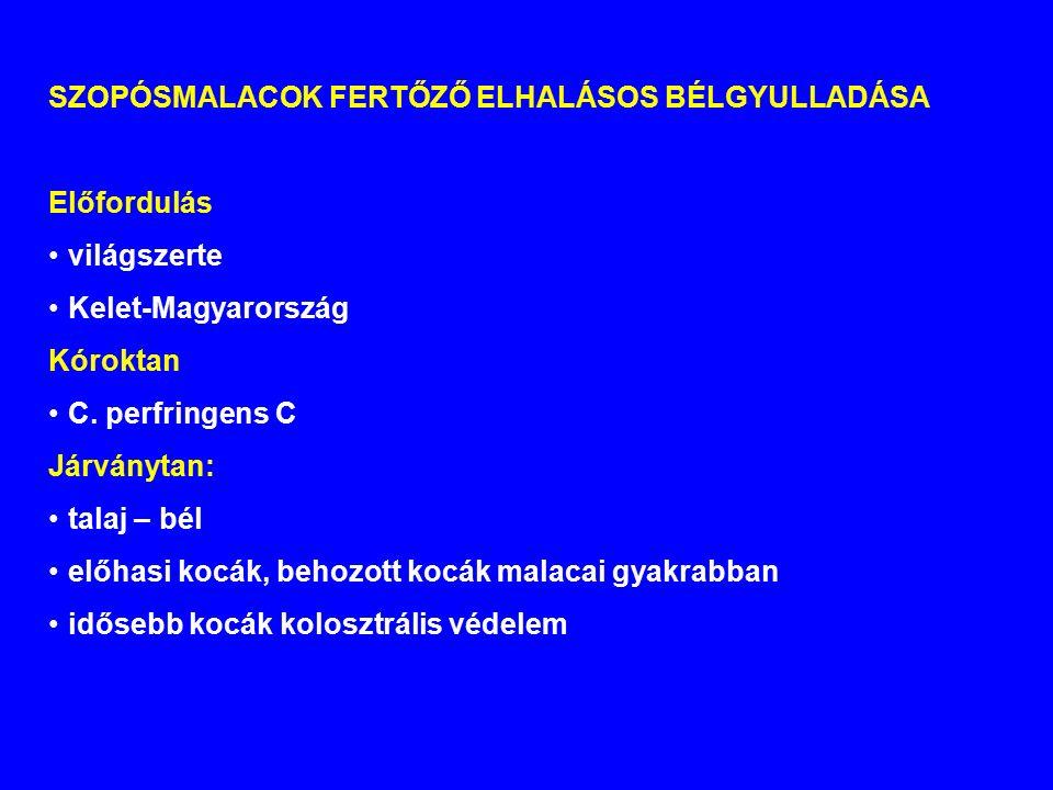 SZOPÓSMALACOK FERTŐZŐ ELHALÁSOS BÉLGYULLADÁSA Előfordulás világszerte Kelet-Magyarország Kóroktan C.