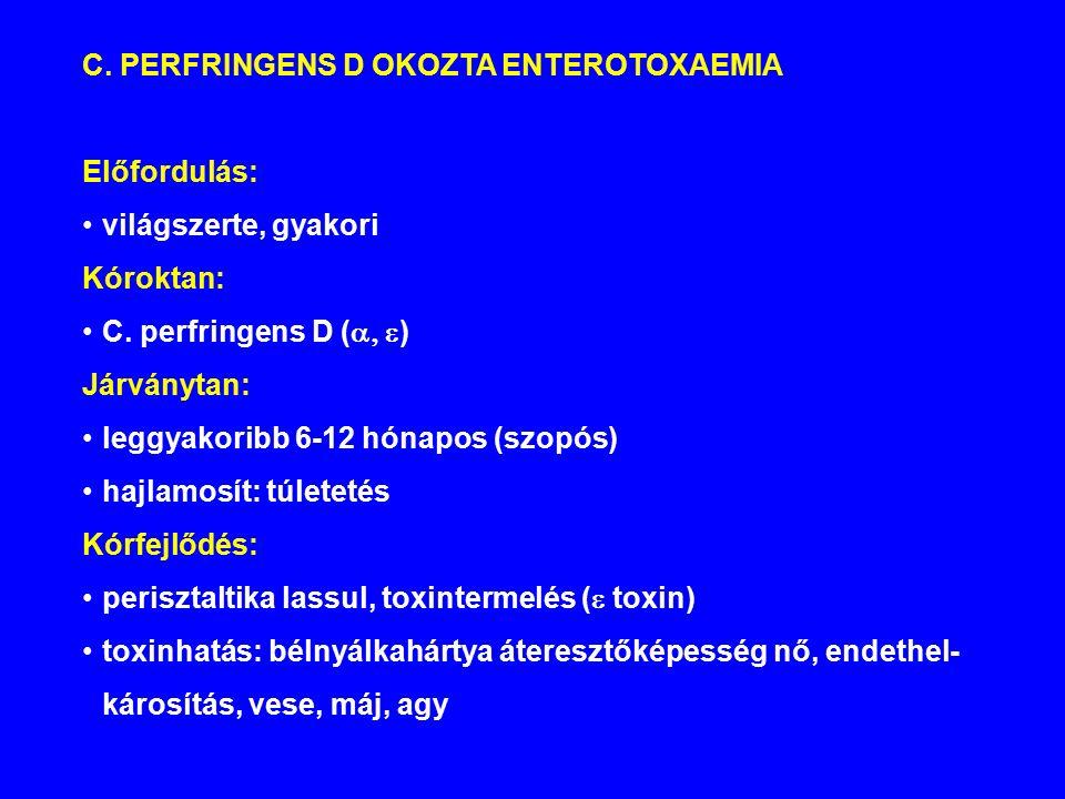 C.PERFRINGENS D OKOZTA ENTEROTOXAEMIA Előfordulás: világszerte, gyakori Kóroktan: C.