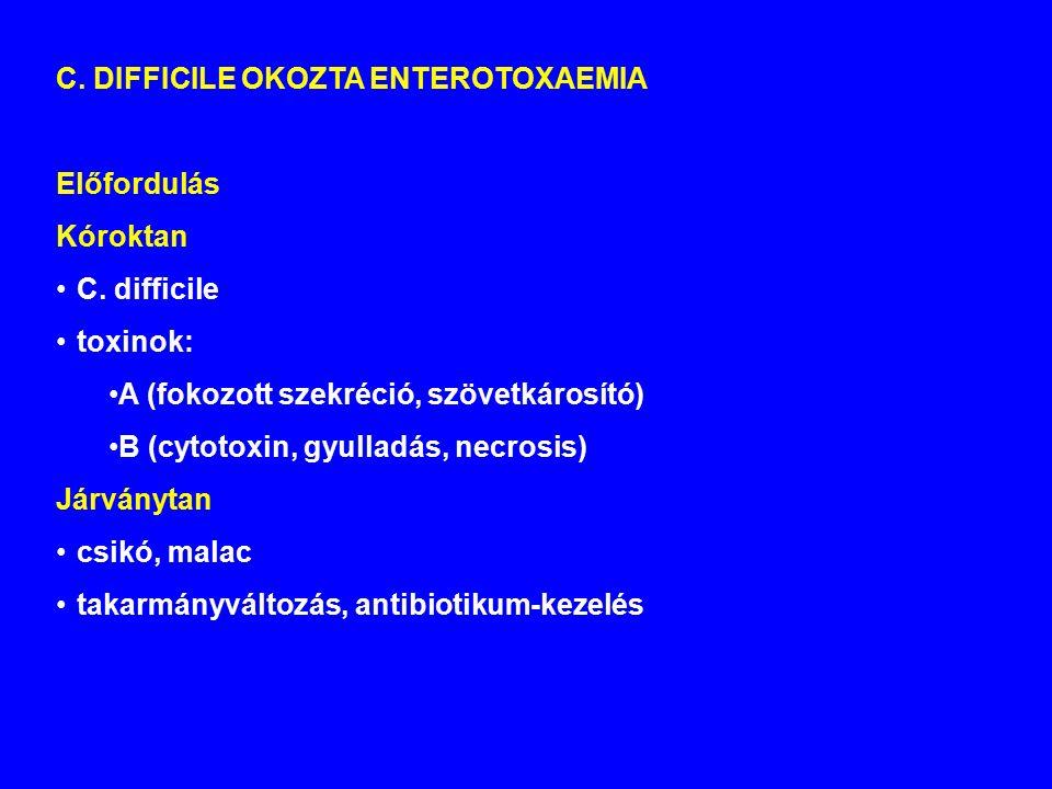 C.DIFFICILE OKOZTA ENTEROTOXAEMIA Előfordulás Kóroktan C.