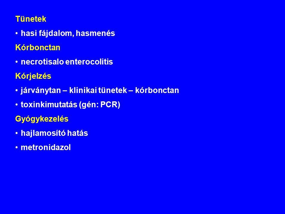 Tünetek hasi fájdalom, hasmenés Kórbonctan necrotisalo enterocolitis Kórjelzés járványtan – klinikai tünetek – kórbonctan toxinkimutatás (gén: PCR) Gyógykezelés hajlamosító hatás metronidazol