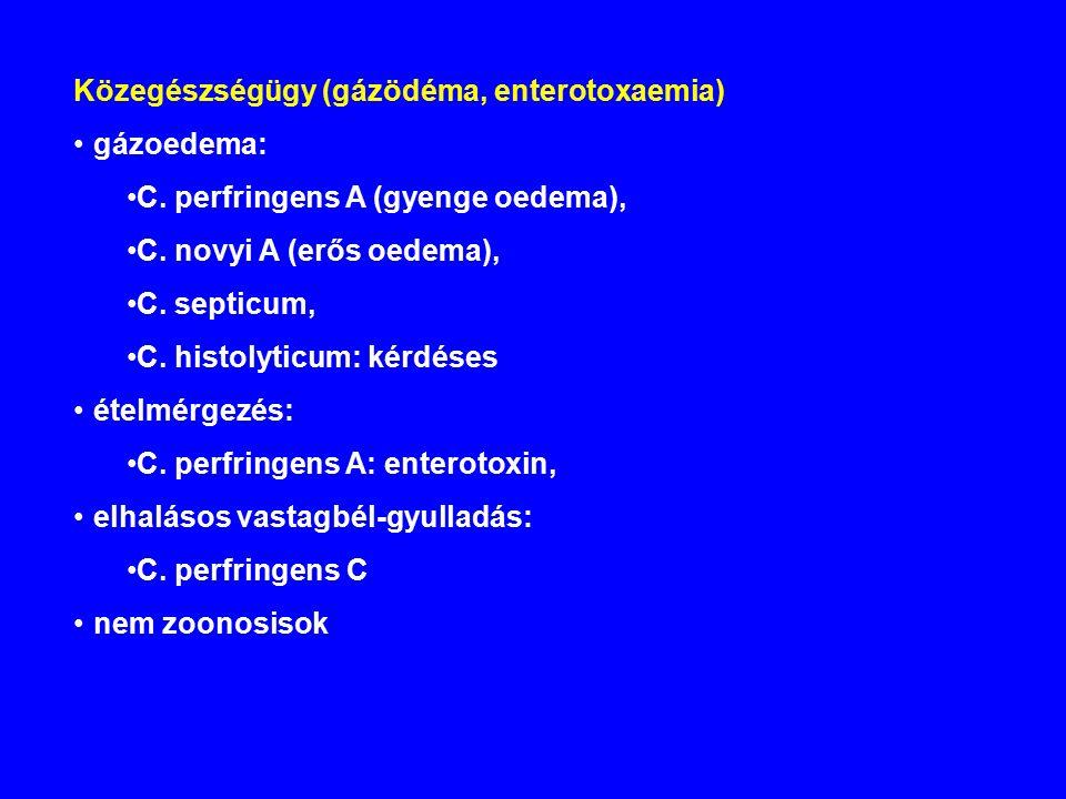 Közegészségügy (gázödéma, enterotoxaemia) gázoedema: C.