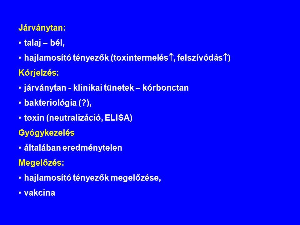 Járványtan: talaj – bél, hajlamosító tényezők (toxintermelés , felszívódás  ) Kórjelzés: járványtan - klinikai tünetek – kórbonctan bakteriológia (?), toxin (neutralizáció, ELISA) Gyógykezelés általában eredménytelen Megelőzés: hajlamosító tényezők megelőzése, vakcina