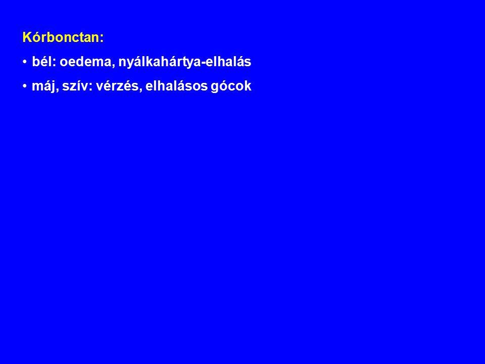 Kórbonctan: bél: oedema, nyálkahártya-elhalás máj, szív: vérzés, elhalásos gócok