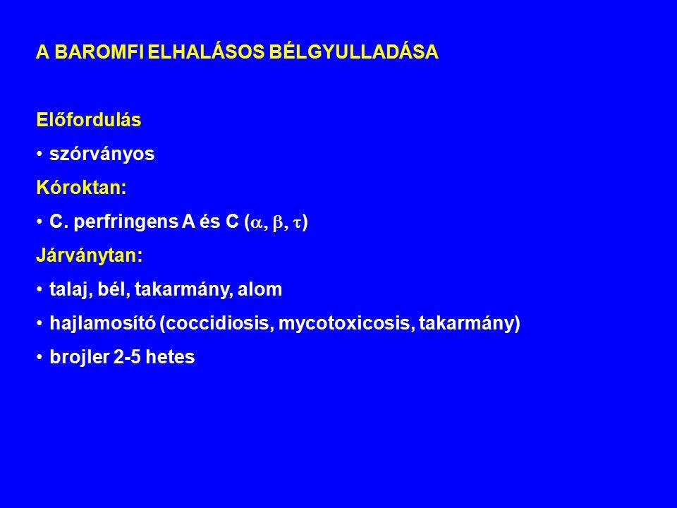 A BAROMFI ELHALÁSOS BÉLGYULLADÁSA Előfordulás szórványos Kóroktan: C.