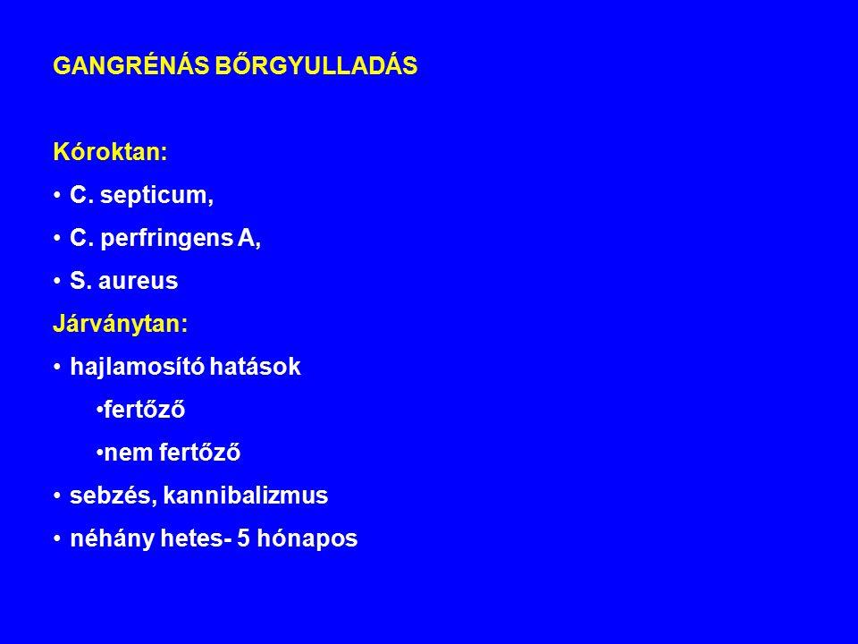 GANGRÉNÁS BŐRGYULLADÁS Kóroktan: C.septicum, C. perfringens A, S.