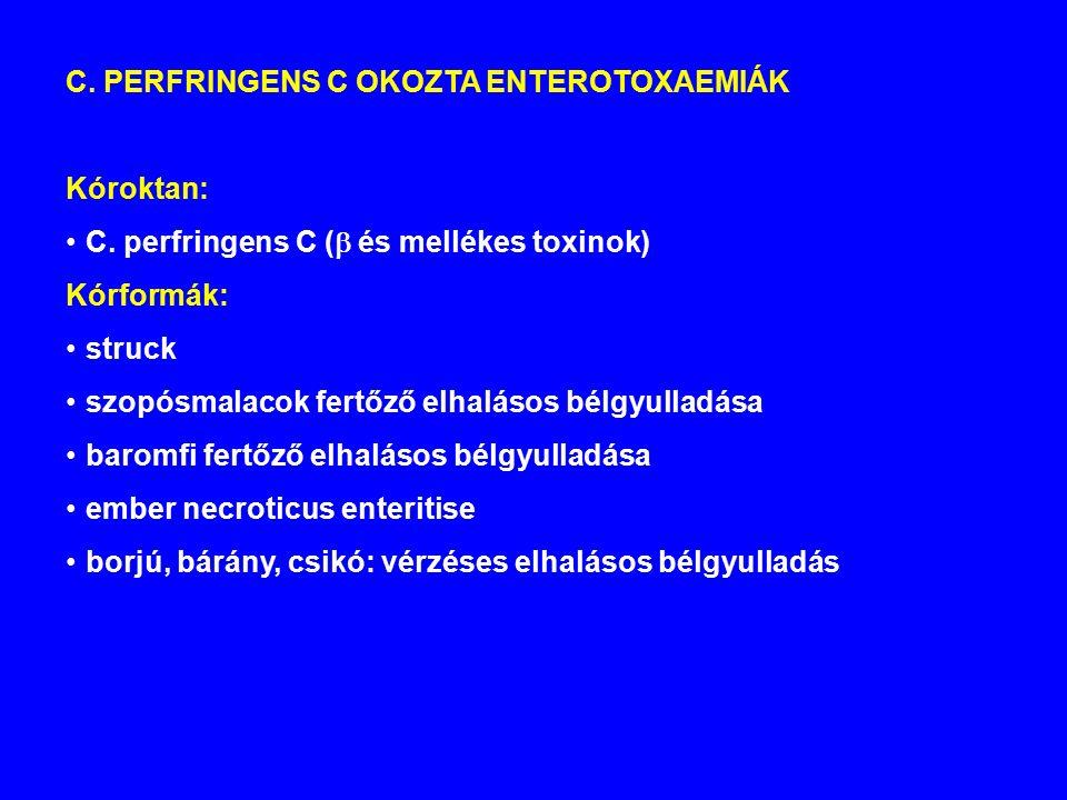 C.PERFRINGENS C OKOZTA ENTEROTOXAEMIÁK Kóroktan: C.