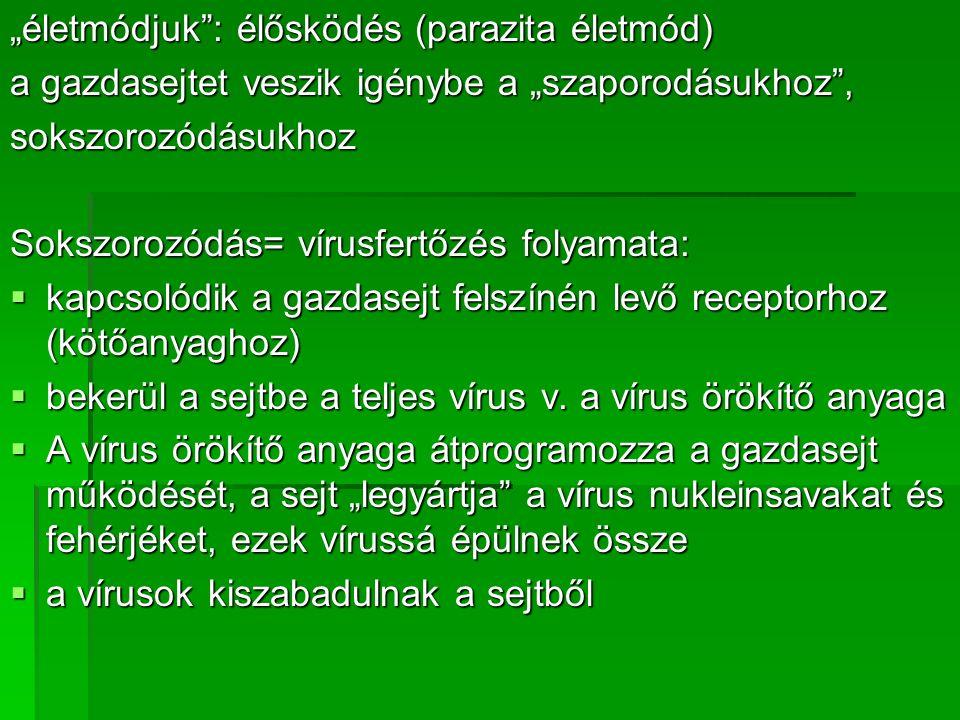 """""""életmódjuk : élősködés (parazita életmód) a gazdasejtet veszik igénybe a """"szaporodásukhoz , sokszorozódásukhoz Sokszorozódás= vírusfertőzés folyamata:  kapcsolódik a gazdasejt felszínén levő receptorhoz (kötőanyaghoz)  bekerül a sejtbe a teljes vírus v."""