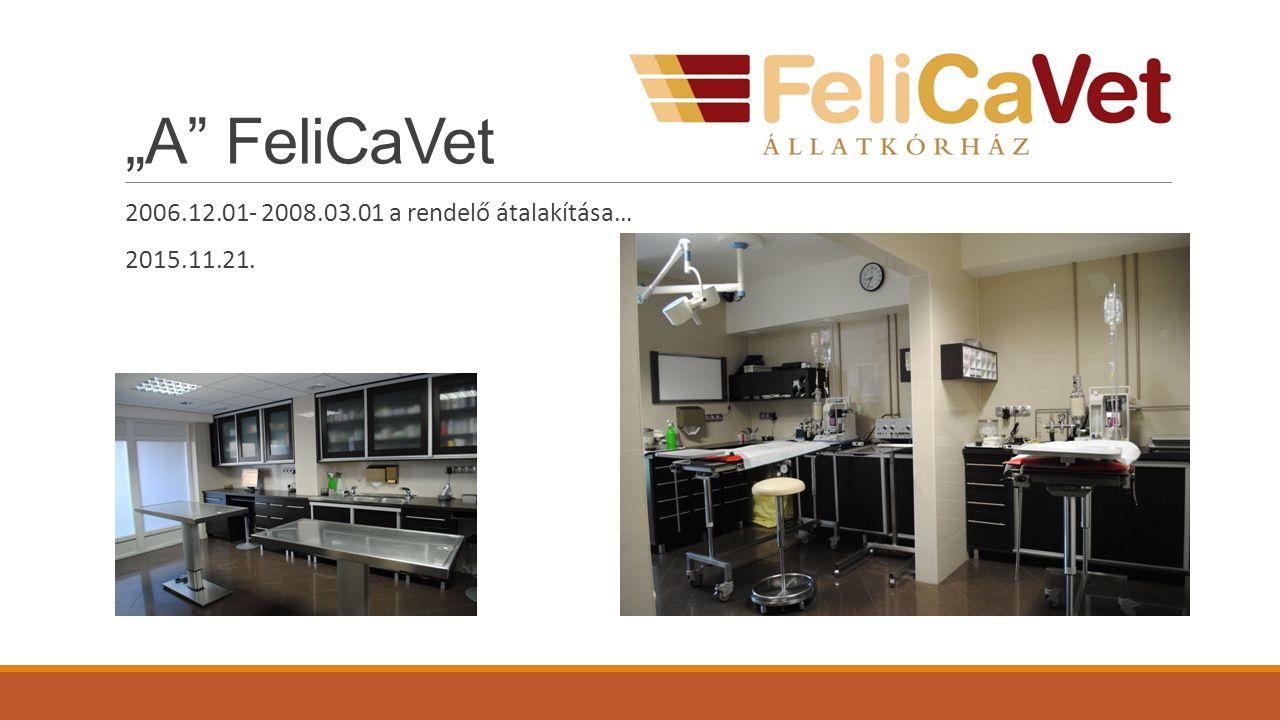 """""""A FeliCaVet 2006.12.01- 2008.03.01 a rendelő átalakítása… 2015.11.21."""