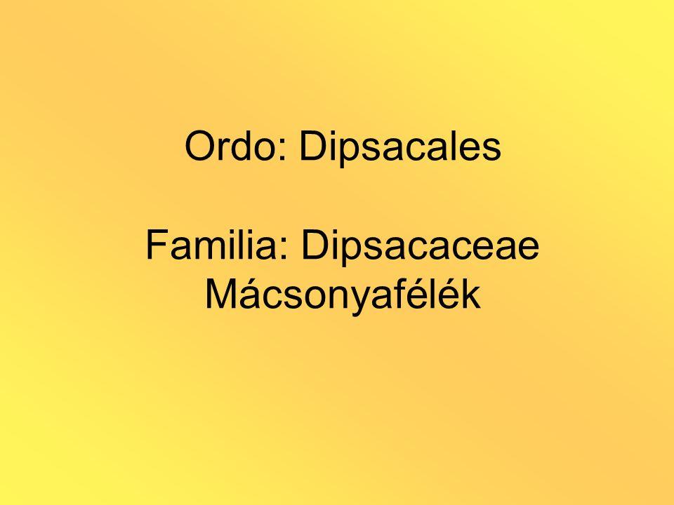 Ordo: Dipsacales Familia: Dipsacaceae Mácsonyafélék
