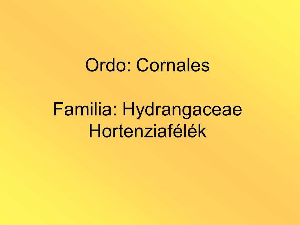 Ordo: Cornales Familia: Hydrangaceae Hortenziafélék