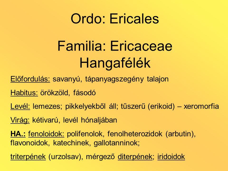 Ordo: Ericales Familia: Ericaceae Hangafélék Előfordulás: savanyú, tápanyagszegény talajon Habitus: örökzöld, fásodó Levél: lemezes; pikkelyekből áll;