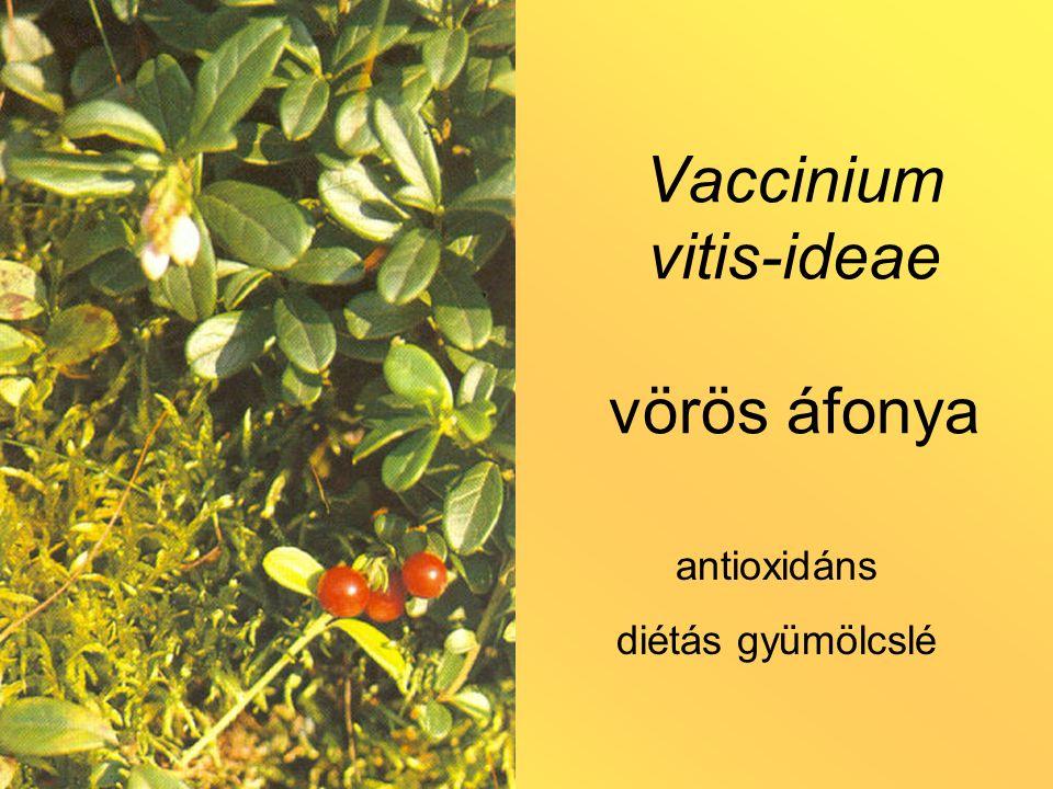 Vaccinium vitis-ideae vörös áfonya antioxidáns diétás gyümölcslé