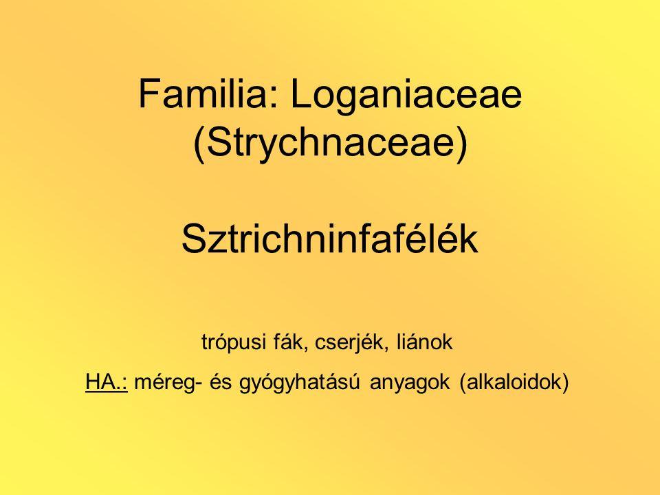 Familia: Loganiaceae (Strychnaceae) Sztrichninfafélék trópusi fák, cserjék, liánok HA.: méreg- és gyógyhatású anyagok (alkaloidok)