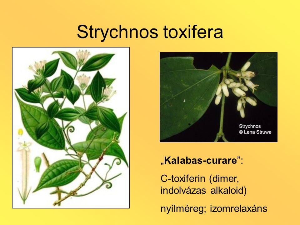 """Strychnos toxifera """"Kalabas-curare"""": C-toxiferin (dimer, indolvázas alkaloid) nyílméreg; izomrelaxáns"""