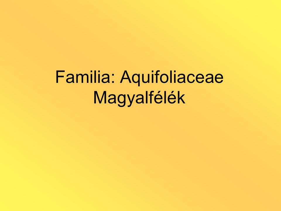 Ordo: Ericales Familia: Ericaceae Hangafélék Előfordulás: savanyú, tápanyagszegény talajon Habitus: örökzöld, fásodó Levél: lemezes; pikkelyekből áll; tűszerű (erikoid) – xeromorfia Virág: kétivarú, levél hónaljában HA.: fenoloidok: polifenolok, fenolheterozidok (arbutin), flavonoidok, katechinek, gallotanninok; triterpének (urzolsav), mérgező diterpének; iridoidok