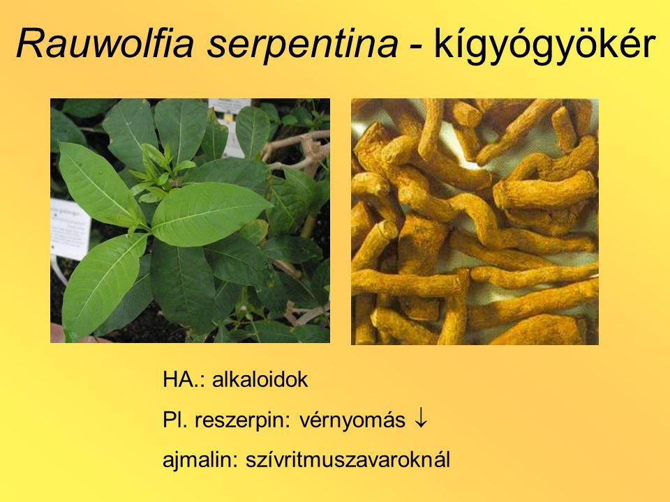 Rauwolfia serpentina - kígyógyökér HA.: alkaloidok Pl. reszerpin: vérnyomás  ajmalin: szívritmuszavaroknál