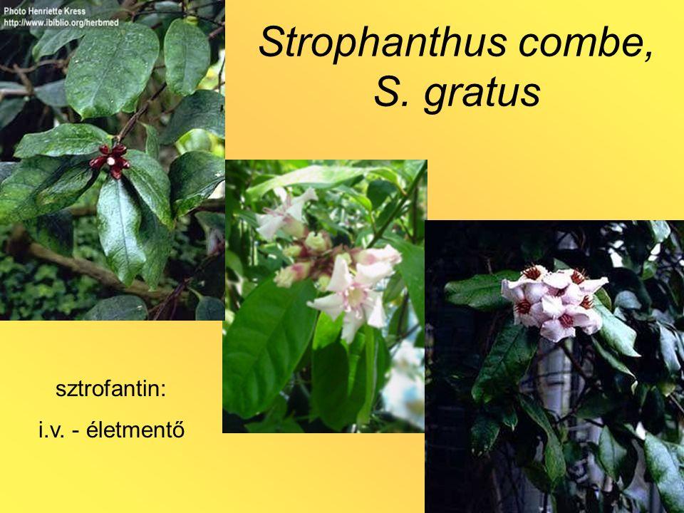 Strophanthus combe, S. gratus sztrofantin: i.v. - életmentő