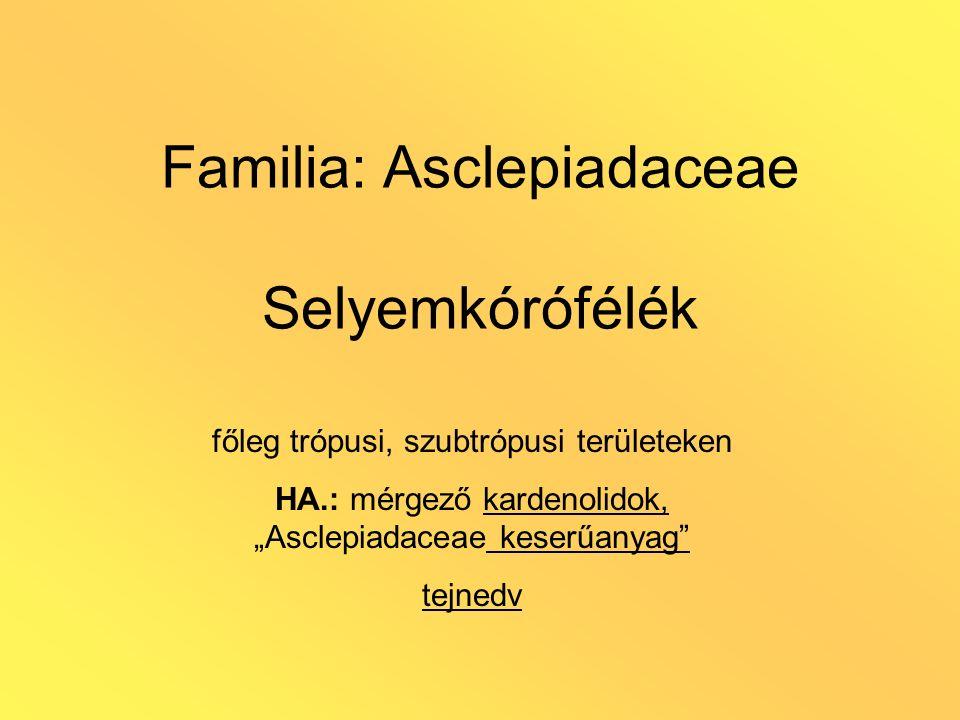 """Familia: Asclepiadaceae Selyemkórófélék főleg trópusi, szubtrópusi területeken HA.: mérgező kardenolidok, """"Asclepiadaceae keserűanyag"""" tejnedv"""
