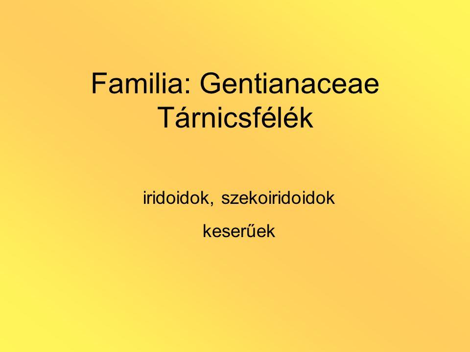 Familia: Gentianaceae Tárnicsfélék iridoidok, szekoiridoidok keserűek