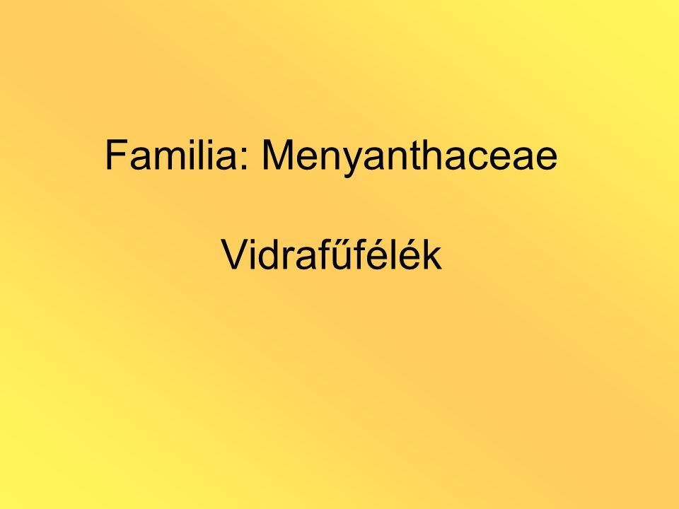 Familia: Menyanthaceae Vidrafűfélék
