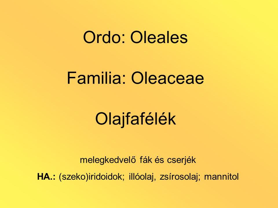 Ordo: Oleales Familia: Oleaceae Olajfafélék melegkedvelő fák és cserjék HA.: (szeko)iridoidok; illóolaj, zsírosolaj; mannitol
