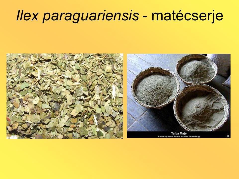 Galium odoratum / Asperula odorata szagos müge