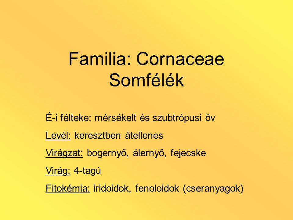 Familia: Cornaceae Somfélék É-i félteke: mérsékelt és szubtrópusi öv Levél: keresztben átellenes Virágzat: bogernyő, álernyő, fejecske Virág: 4-tagú F