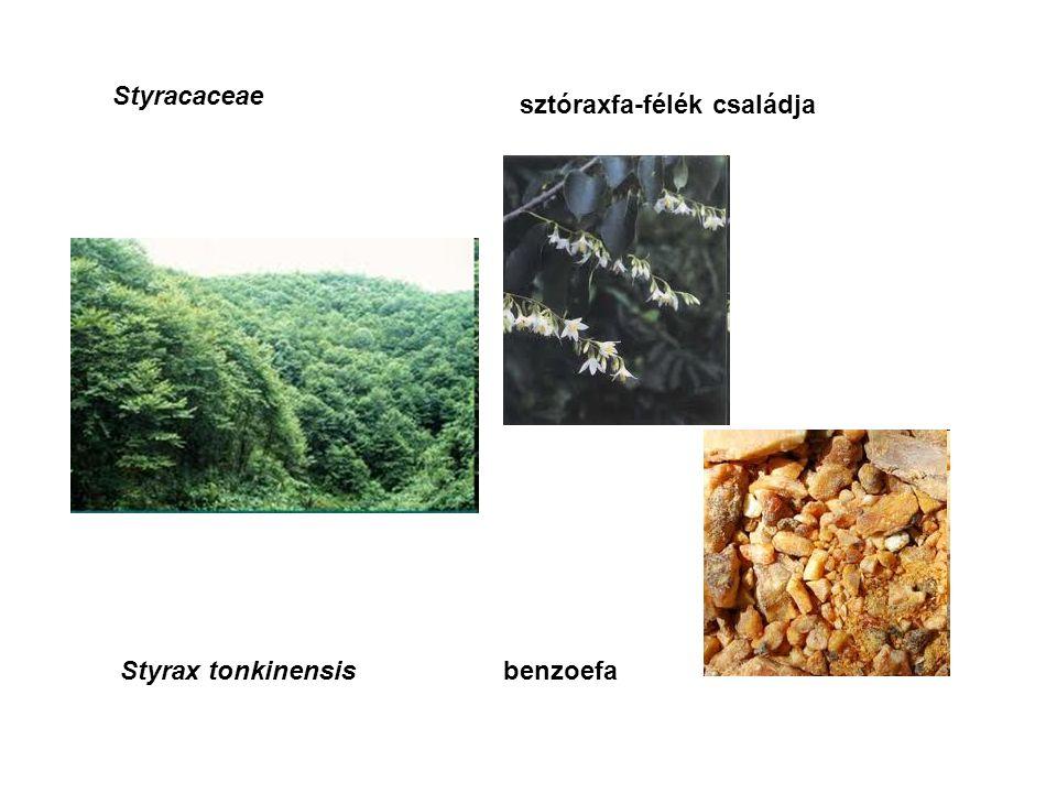 Styracaceae sztóraxfa-félék családja Styrax tonkinensisbenzoefa