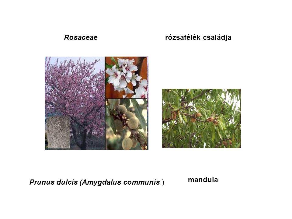 Rosaceae rózsafélék családja Crataegus laevigata, C.