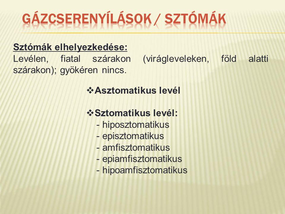 Sztómák elhelyezkedése: Levélen, fiatal szárakon (virágleveleken, föld alatti szárakon); gyökéren nincs.  Asztomatikus levél  Sztomatikus levél: - h