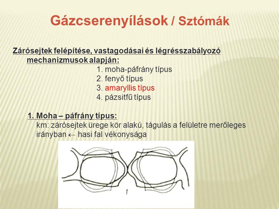 Gázcserenyílások / Sztómák Zárósejtek felépítése, vastagodásai és légrésszabályozó mechanizmusok alapján: 1. moha-páfrány típus 2. fenyő típus 3. amar