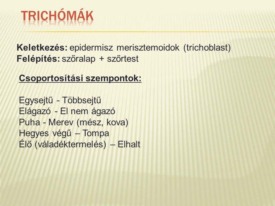 Keletkezés: epidermisz merisztemoidok (trichoblast) Felépítés: szőralap + szőrtest Csoportosítási szempontok: Egysejtű - Többsejtű Elágazó - El nem ágazó Puha - Merev (mész, kova) Hegyes végű – Tompa Élő (váladéktermelés) – Elhalt