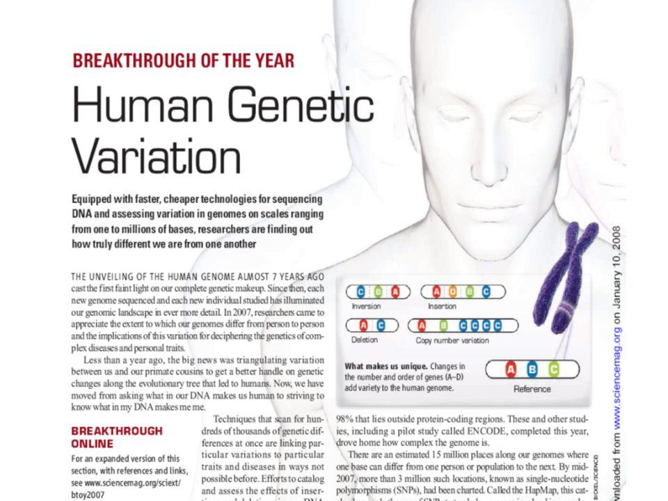 Affymetrix 1,8 millió genetikai variáció/chip