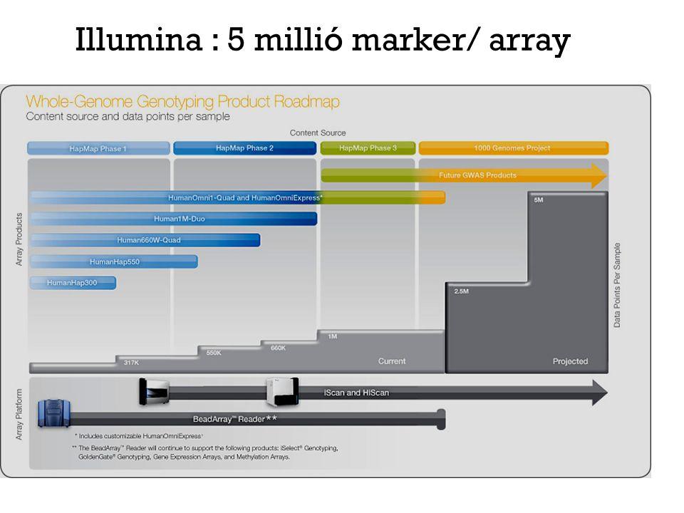 Teljes genom génexpressziós mérés pl.: 44k chip: 44 ezer mRNS expresszióját méri egyszerre.