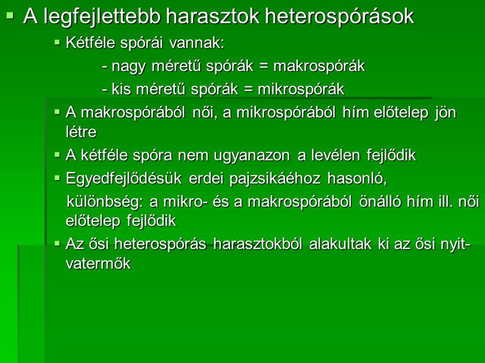  A legfejlettebb harasztok heterospórások  Kétféle spórái vannak: - nagy méretű spórák = makrospórák - kis méretű spórák = mikrospórák  A makrospór