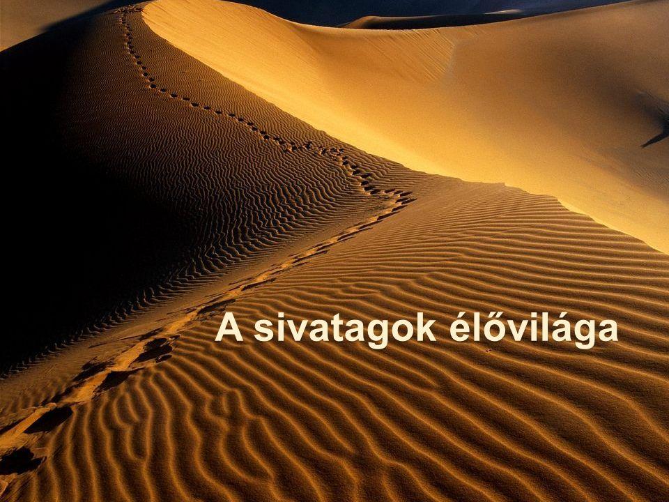 A sivatagok élővilága