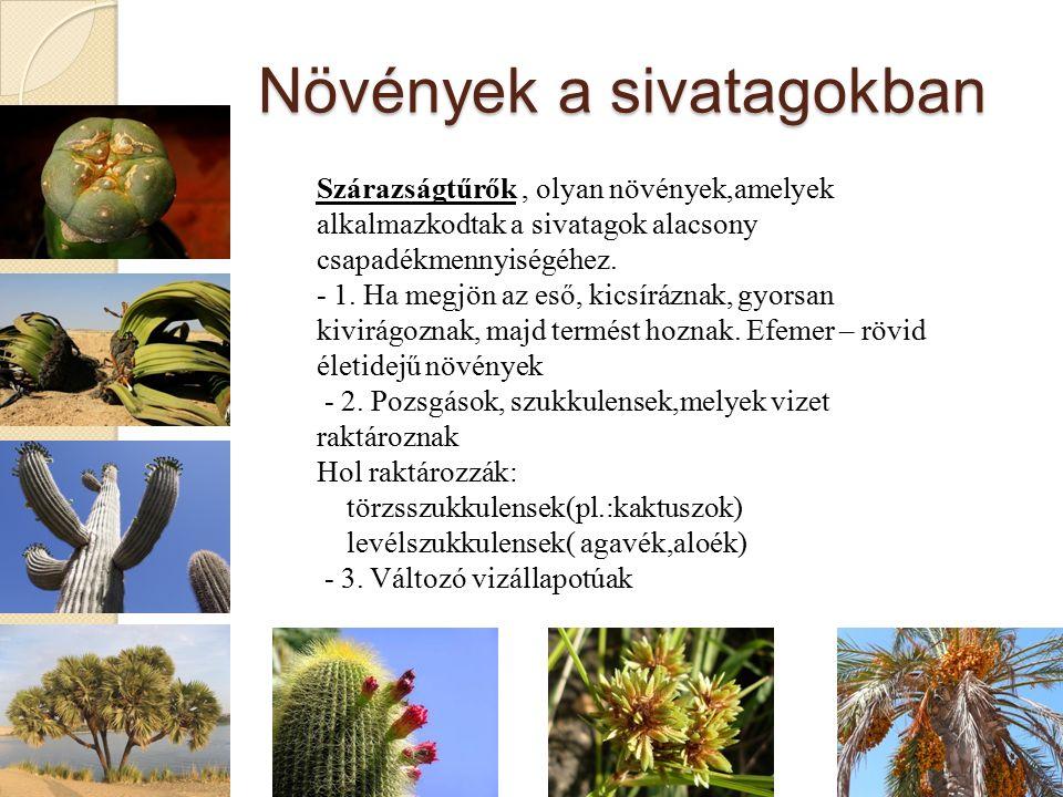 Növények a sivatagokban Szárazságtűrők, olyan növények,amelyek alkalmazkodtak a sivatagok alacsony csapadékmennyiségéhez.