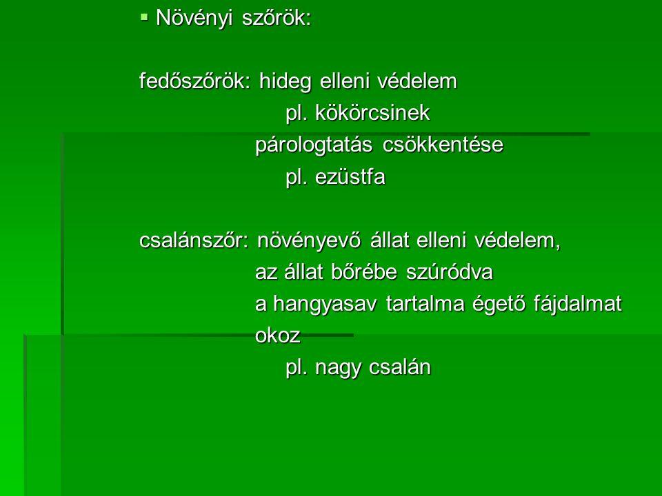  Növényi szőrök: fedőszőrök: hideg elleni védelem pl.