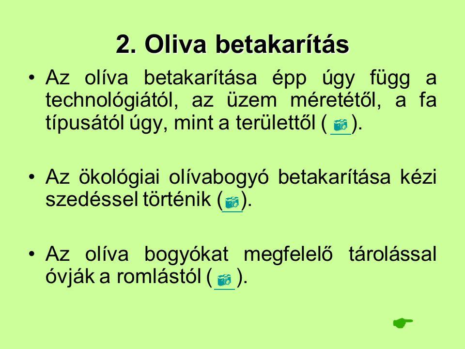 2. Oliva betakarítás Az olíva betakarítása épp úgy függ a technológiától, az üzem méretétől, a fa típusától úgy, mint a területtől ( ). Az ökológiai o