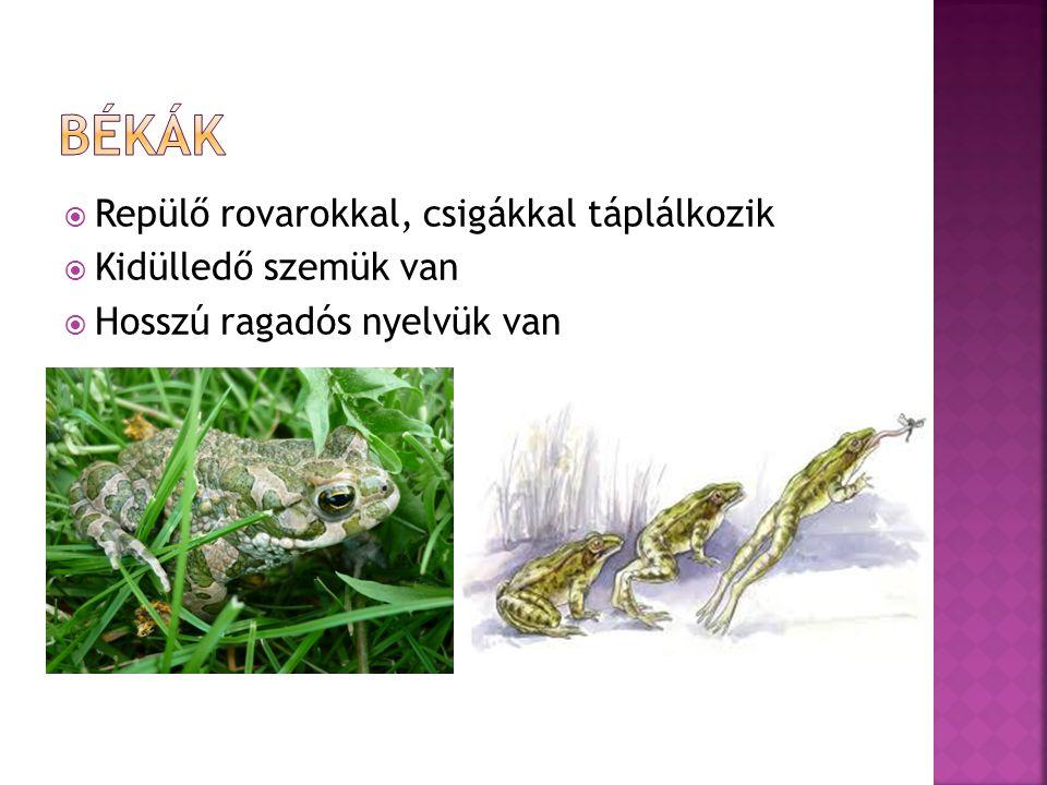  Repülő rovarokkal, csigákkal táplálkozik  Kidülledő szemük van  Hosszú ragadós nyelvük van