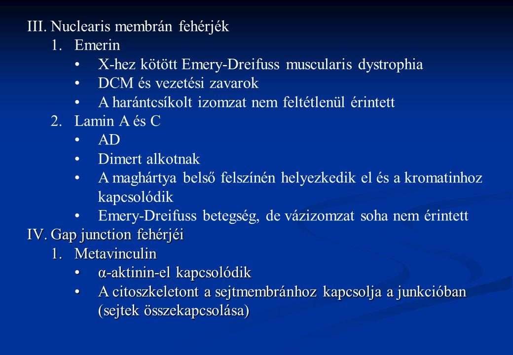III.Nuclearis membrán fehérjék 1.Emerin X-hez kötött Emery-Dreifuss muscularis dystrophia DCM és vezetési zavarok A harántcsíkolt izomzat nem feltétle
