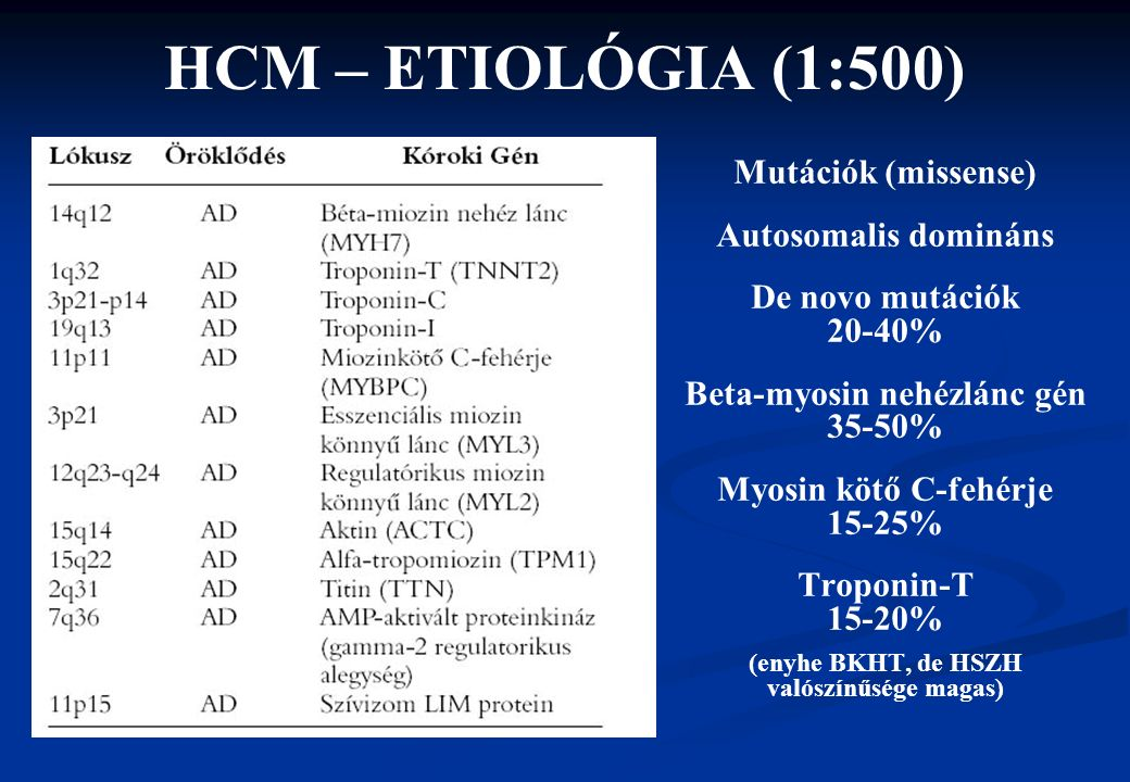 HCM – ETIOLÓGIA (1:500) Mutációk (missense) Autosomalis domináns De novo mutációk 20-40% Beta-myosin nehézlánc gén 35-50% Myosin kötő C-fehérje 15-25%